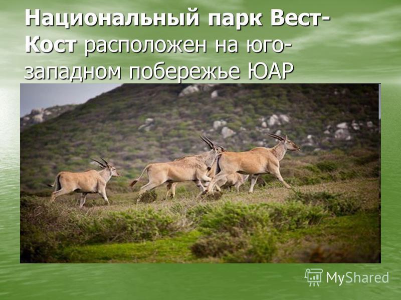 Национальный парк Вест- Кост расположен на юго- западном побережье ЮАР