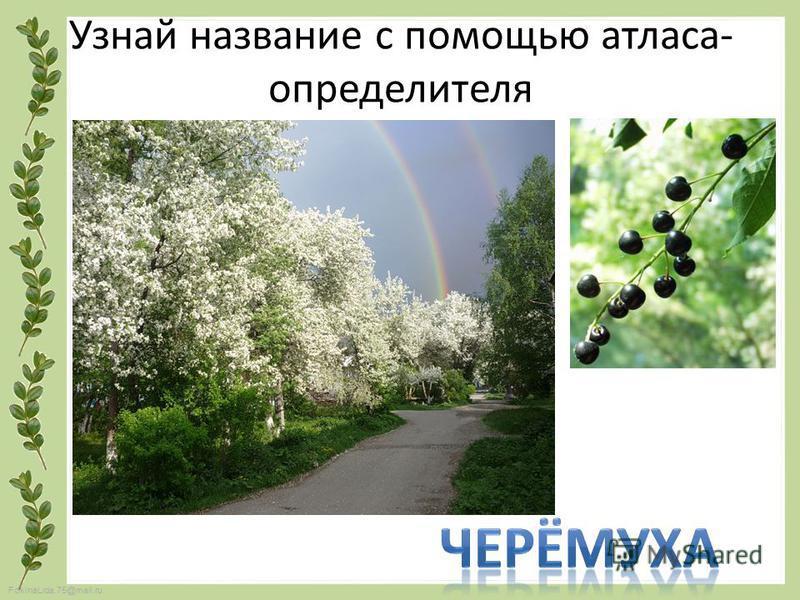 FokinaLida.75@mail.ru Узнай название с помощью атласа- определителя