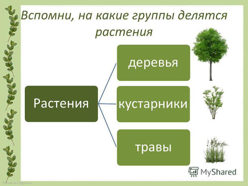 FokinaLida.75@mail.ru Вспомни, на какие группы делятся растения Растениядеревьякустарникитравы