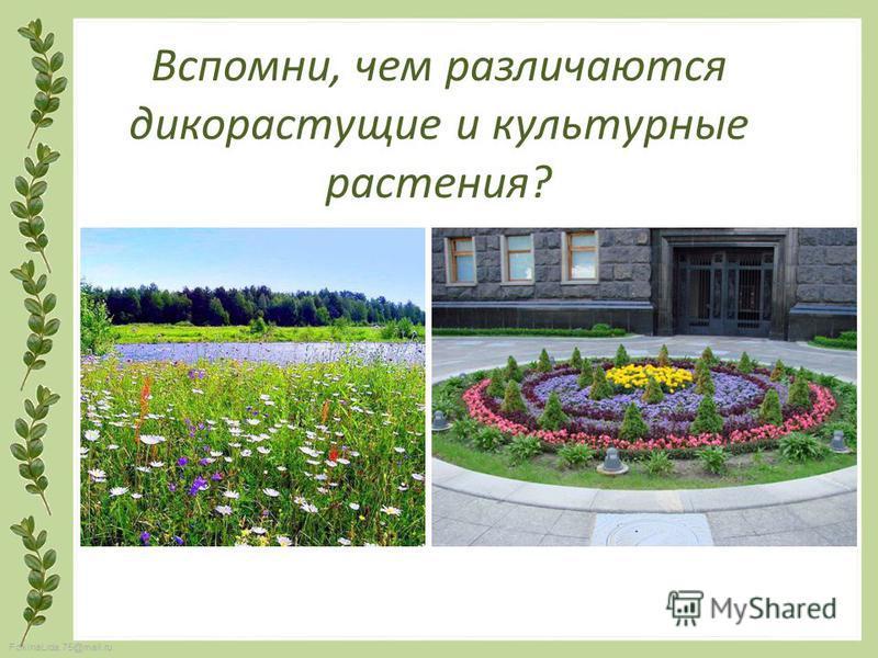 FokinaLida.75@mail.ru Вспомни, чем различаются дикорастущие и культурные растения?