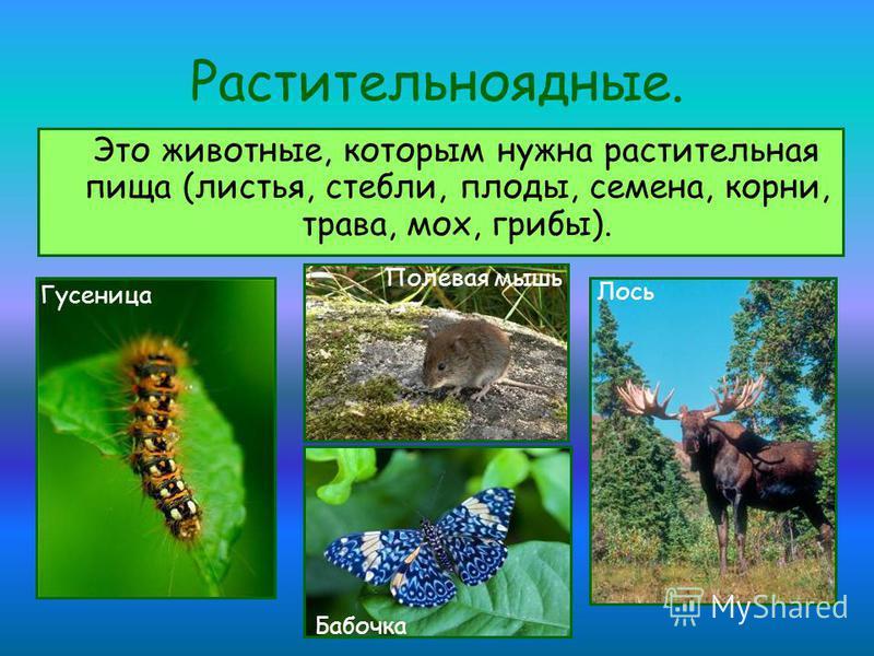Растительноядные. Это животные, которым нужна растительная пища (листья, стебли, плоды, семена, корни, трава, мох, грибы). Гусеница Бабочка Лось Полевая мышь