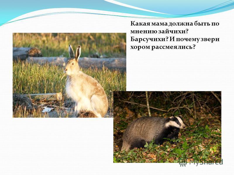 Какая мама должна быть по мнению зайчихи? Барсучихи? И почему звери хором рассмеялись?