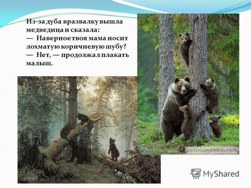 Из-за дуба вразвалку вышла медведица и сказала: Наверное твоя мама носит лохматую коричневую шубу? Нет, продолжал плакать малыш.