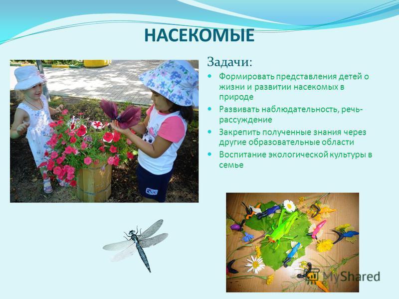 НАСЕКОМЫЕ Задачи: Формировать представления детей о жизни и развитии насекомых в природе Развивать наблюдательность, речь- рассуждение Закрепить полученные знания через другие образовательные области Воспитание экологической культуры в семье