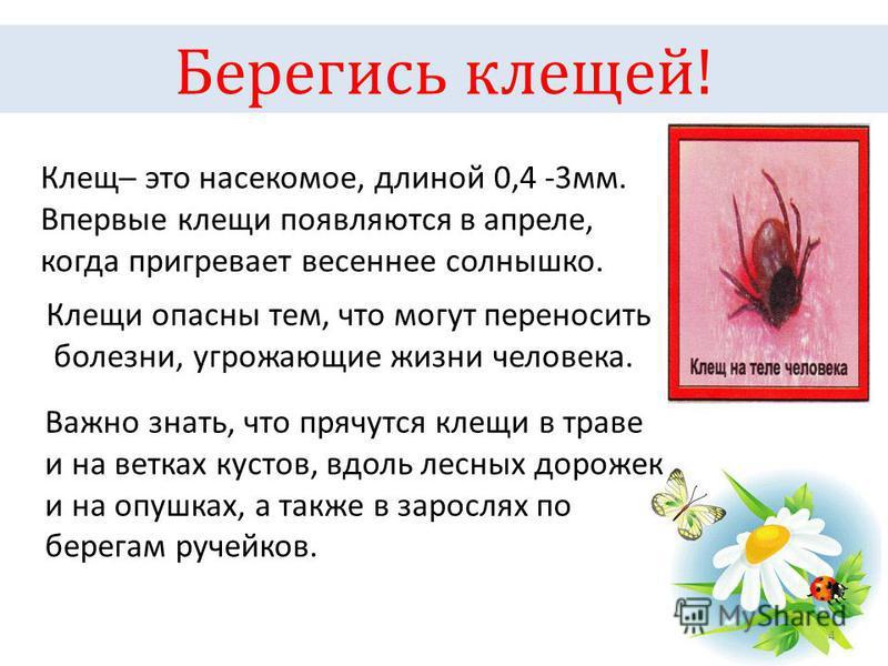 Берегись клещей! 4 Клещ это насекомое, длиной 0,4 -3 мм. Впервые клещи появляются в апреле, когда пригревает весеннее солнышко. Клещи опасны тем, что могут переносить болезни, угрожающие жизни человека. Важно знать, что прячутся клещи в траве и на ве