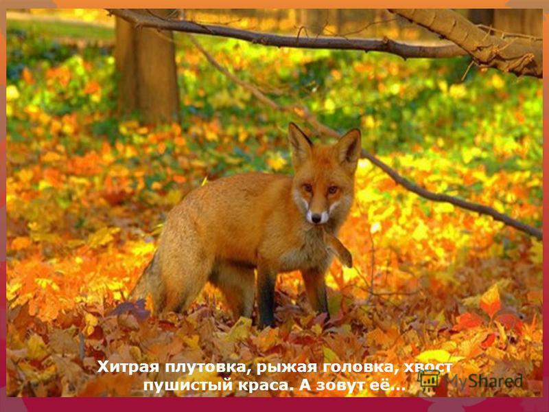 Трав копытами касаясь, Ходит по лесу красавец. Ходит смело и легко, Рога раскинув широко.