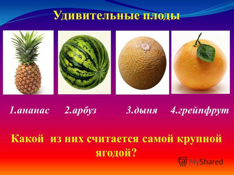 1. ананас 2. арбуз 3. дыня 4. грейпфрут Удивительные плоды Какой из них считается самой крупной ягодой?