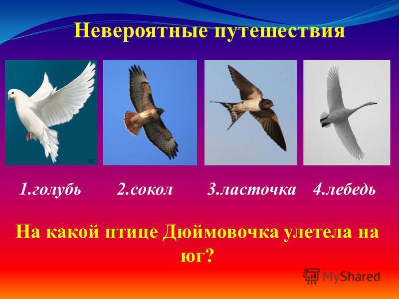 1. голубь 2. сокол 3. ласточка 4. лебедь Невероятные путешествия На какой птице Дюймовочка улетела на юг?