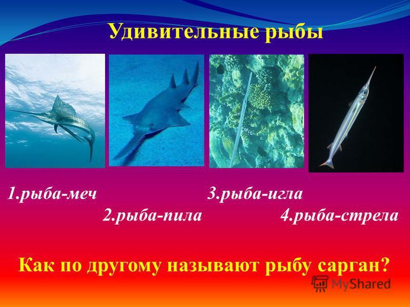 1.рыба-меч 3.рыба-игла 2.рыба-пила 4.рыба-стрела Удивительные рыбы Как по другому называют рыбу сарган?