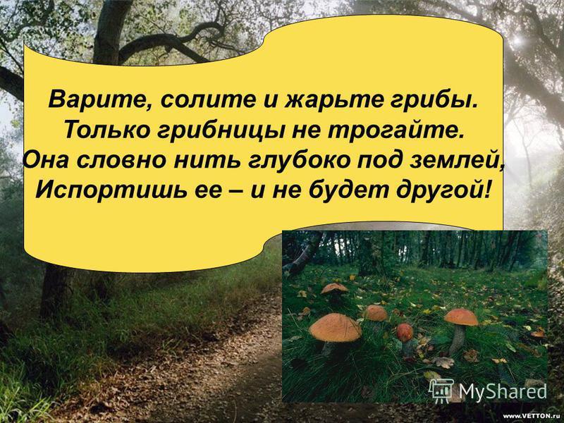 Варите, солите и жарьте грибы. Только грибницы не трогайте. Она словно нить глубоко под землей, Испортишь ее – и не будет другой!