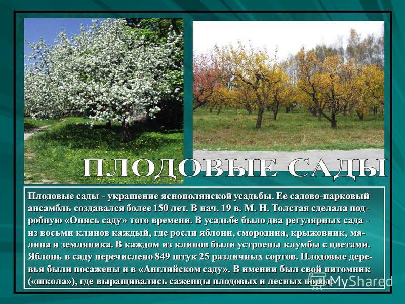 Плодовые сады - украшение яснополянской усадьбы. Ее садово-парковый ансамбль создавался более 150 лет. В нач. 19 в. М. Н. Толстая сделала подробную «Опись саду» того времени. В усадьбе было два регулярных сада - из восьми клейнов каждый, где росли яб