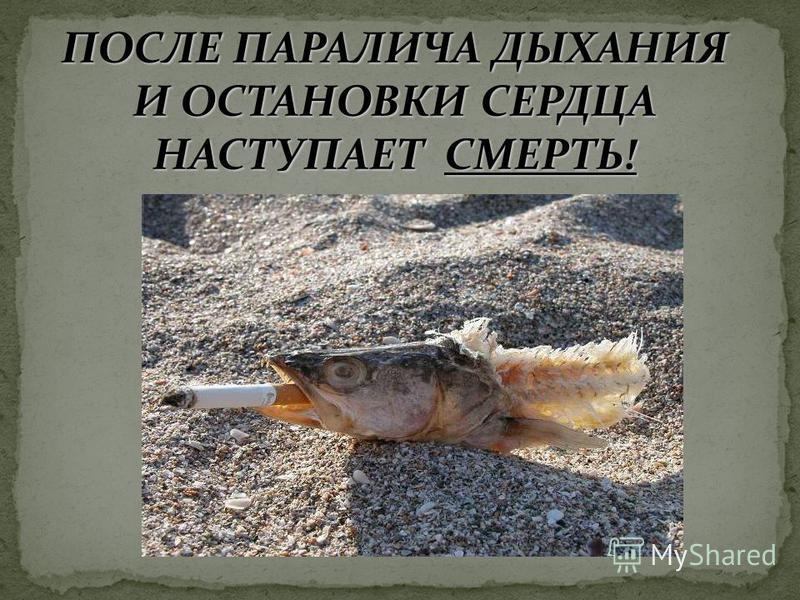 ПОСЛЕ ПАРАЛИЧА ДЫХАНИЯ И ОСТАНОВКИ СЕРДЦА НАСТУПАЕТ СМЕРТЬ!