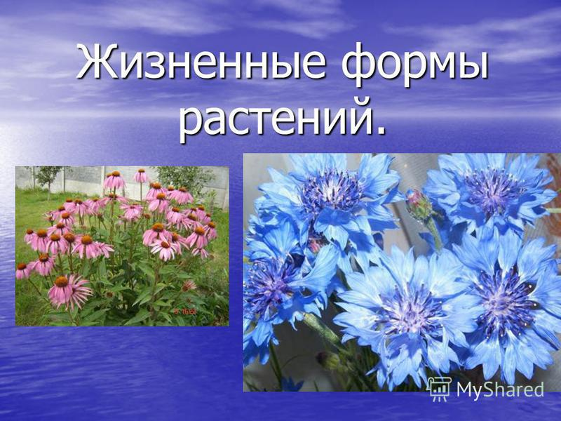 Жизненные формы растений.