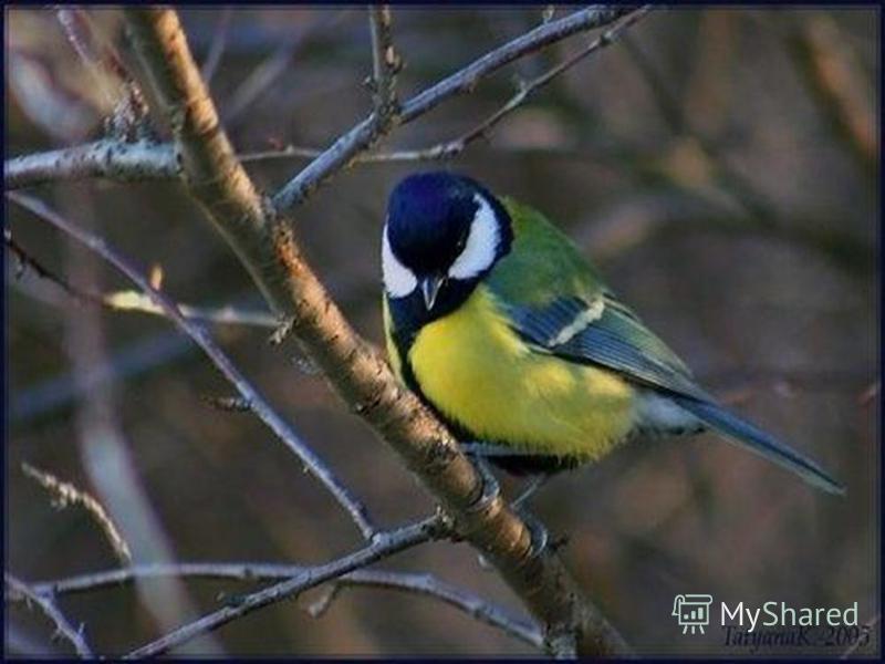 Какую птицу лучше иметь в руке, чем другую – в небесах?.