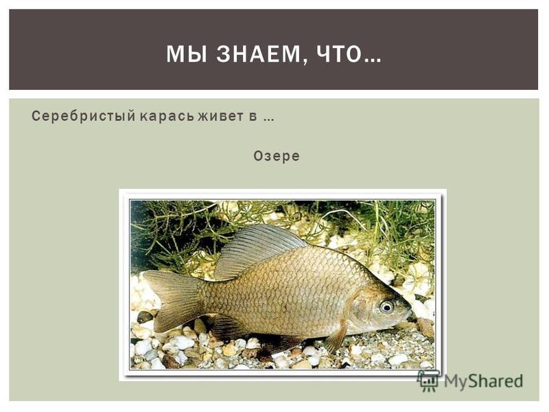 Серебристый карась живет в … Озере МЫ ЗНАЕМ, ЧТО…