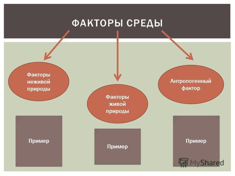 Факторы неживой природы Антропогенный фактор Факторы живой природы Пример