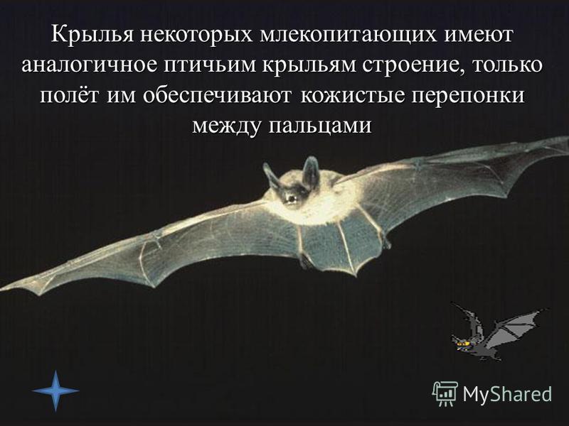 Птицы приобрели замечательную возможность парить в небесах, высматривая себе добычу. Орлы могут долгое время кружить над землей без единого взмаха крыла, благодаря тому, что умеют правильно планировать в потоках воздуха