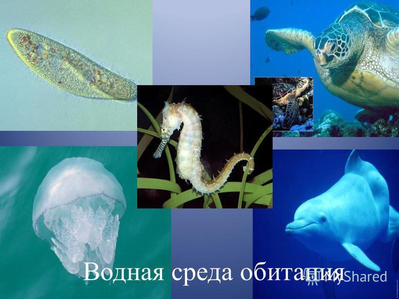 Среды обитания Водная Наземно- воздушная Почвенная Организ- менная