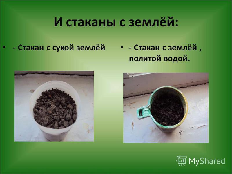 И стаканы с землёй: - Стакан с сухой землёй - Стакан с землёй, политой водой.