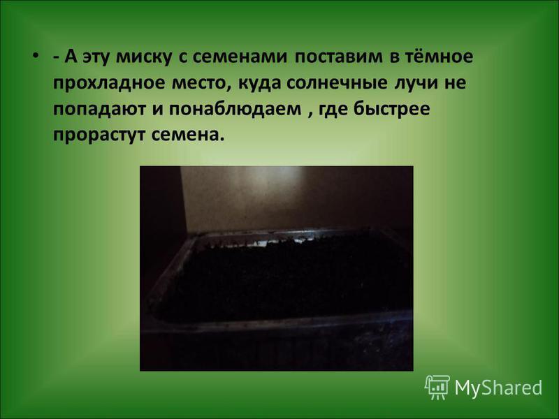 - А эту миску с семенами поставим в тёмное прохладное место, куда солнечные лучи не попадают и понаблюдаем, где быстрее прорастут семена.