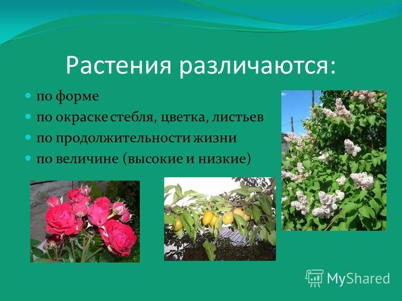 Растения различаются: по форме по окраске стебля, цветка, листьев по продолжительности жизни по величине (высокие и низкие)