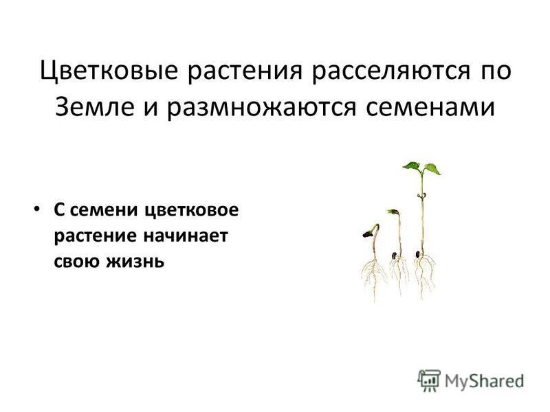 Презентация по биологии 6 класс строение семени