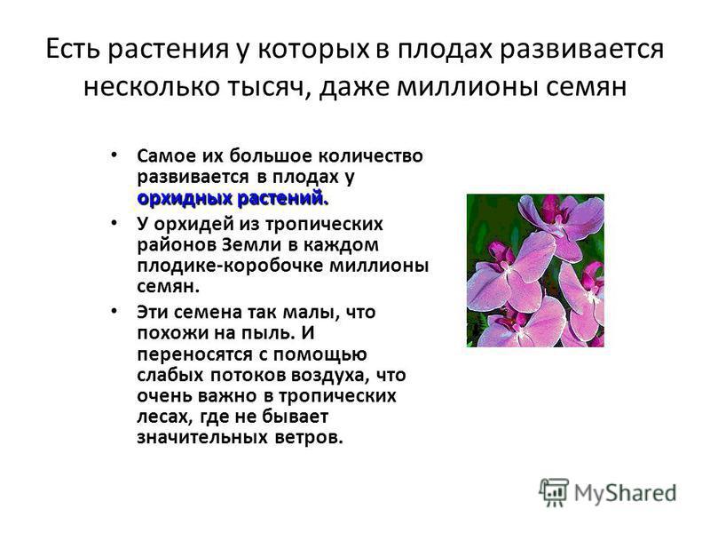 Есть растения у которых в плодах развивается несколько тысяч, даже миллионы семян орхидных растений. Самое их большое количество развивается в плодах у орхидных растений. У орхидей из тропических районов Земли в каждом плодике-коробочке миллионы семя