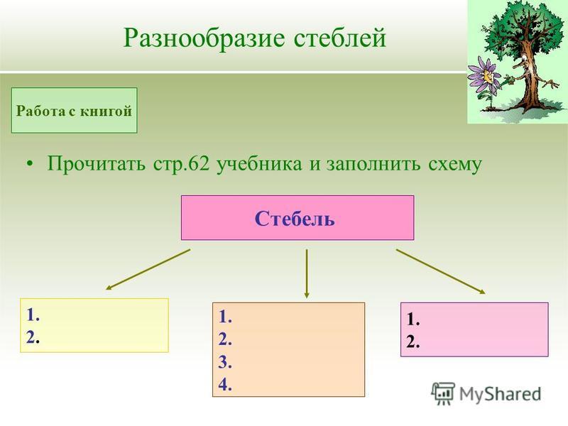 Разнообразие стеблей Прочитать стр.62 учебника и заполнить схему Работа с книгой Стебель 1. 2. 1. 2. 3. 4. 1. 2.