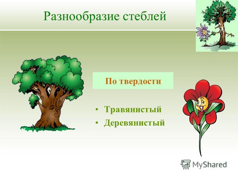 Травянистый Деревянистый Разнообразие стеблей По твердости