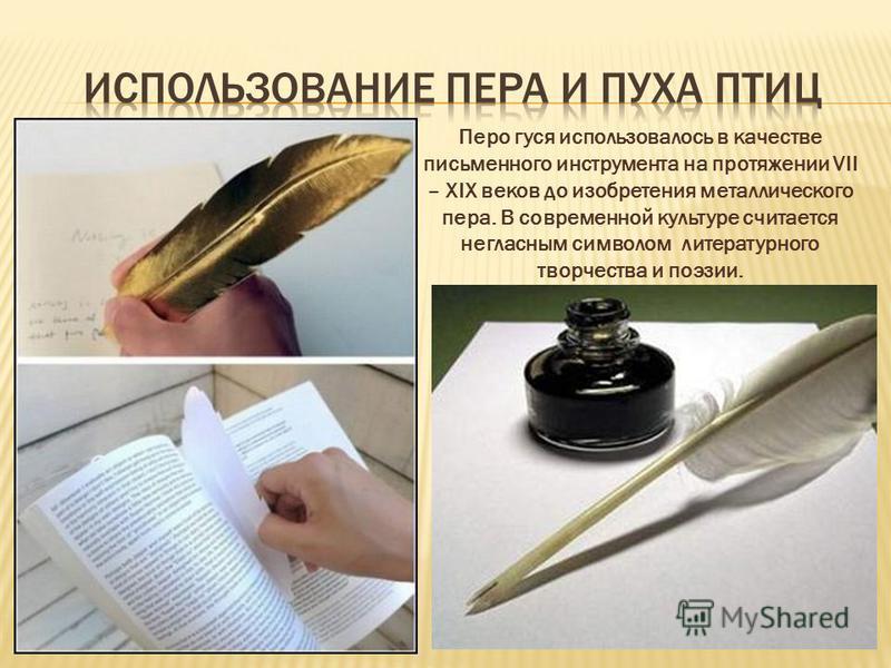 Перо гуся использовалось в качестве письменного инструмента на протяжении VII – XIX веков до изобретения металлического пера. В современной культуре считается негласным символом литературного творчества и поэзии.