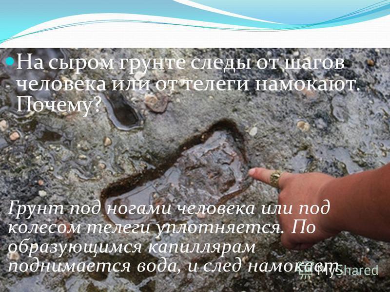 На сыром грунте следы от шагов человека или от телеги намокают. Почему? Грунт под ногами человека или под колесом телеги уплотняется. По образующимся капиллярам поднимается вода, и след намокает.
