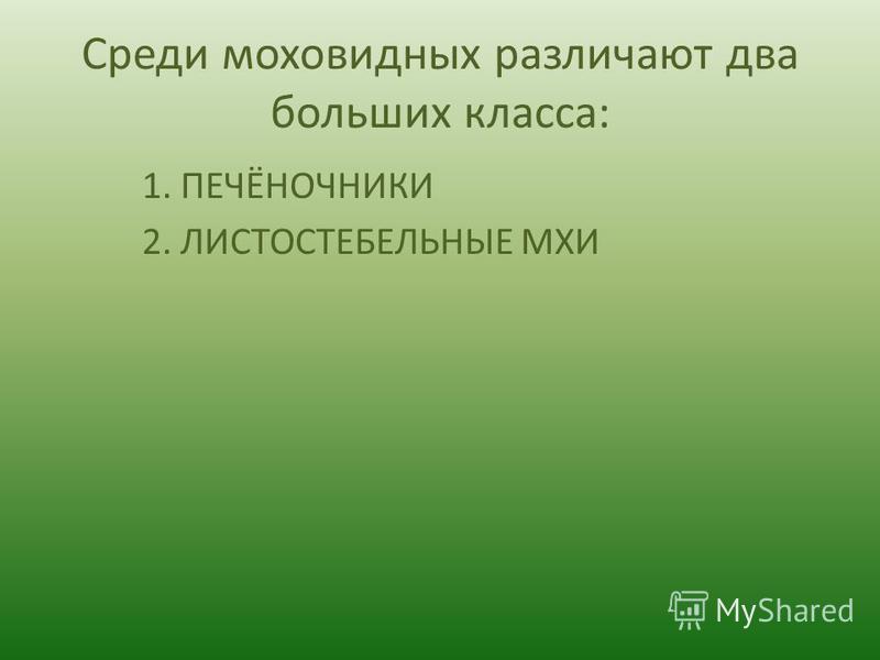 Среди моховидных различают два больших класса: 1. ПЕЧЁНОЧНИКИ 2. ЛИСТОСТЕБЕЛЬНЫЕ МХИ