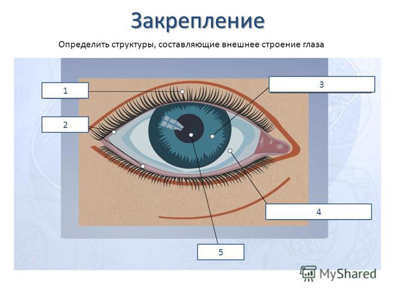 Закрепление 1 2 3 4 5 Определить структуры, составляющие внешнее строение глаза