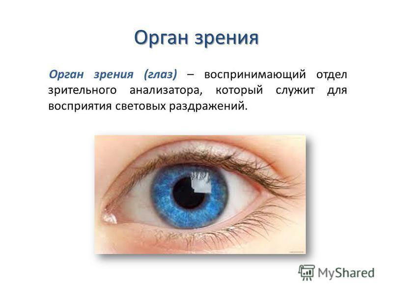 Орган зрения Орган зрения (глаз) – воспринимающий отдел зрительного анализатора, который служит для восприятия световых раздражений.