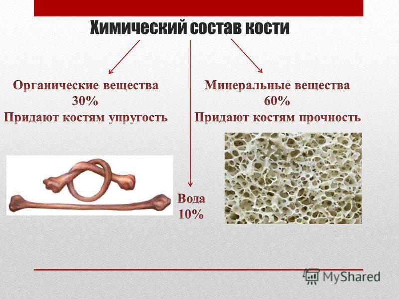 Химический состав кости