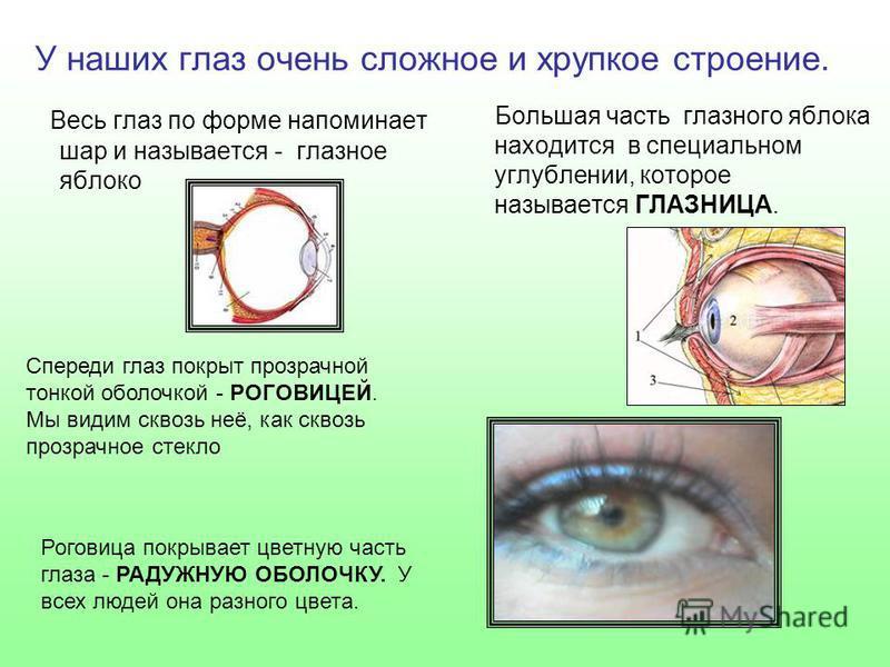 У наших глаз очень сложное и хрупкое строение. Весь глаз по форме напоминает шар и называется - глазное яблоко Большая часть глазного яблока находится в специальном углублении, которое называется ГЛАЗНИЦА. Спереди глаз покрыт прозрачной тонкой оболоч