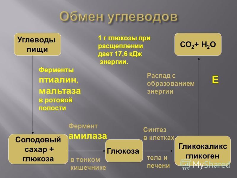 Углеводы пищи Солодовый сахар + глюкоза Глюкоза Гликокаликс гликоген СО 2 + Н 2 О Ферменты птиалин, мальтаза в ротовой полости Фермент амилаза в тонком кишечнике Синтез в клетках тела и печени Распад с образованием энергии 1 г глюкозы при расщеплении