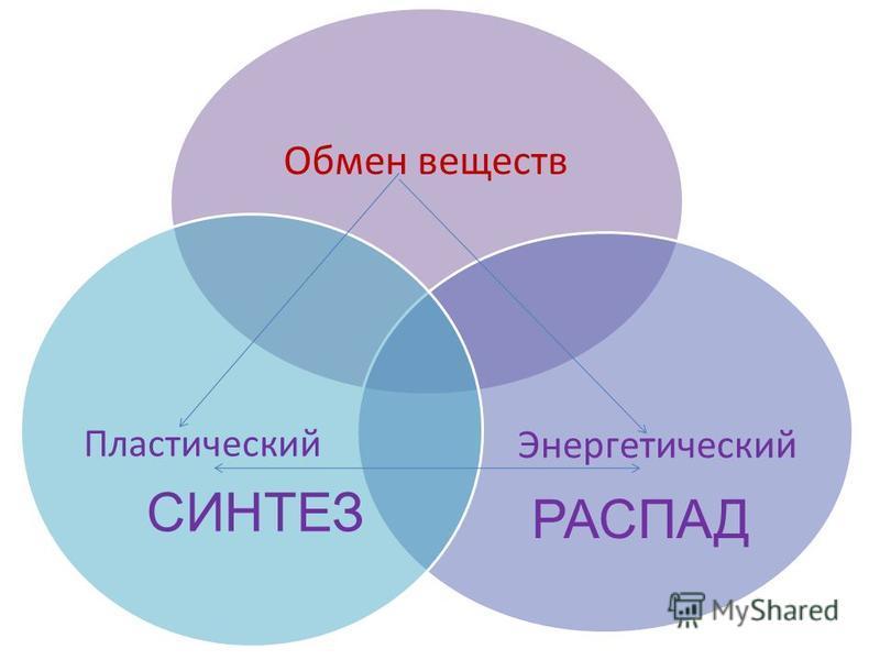 Обмен веществ Энергетический Пластический СИНТЕЗ РАСПАД