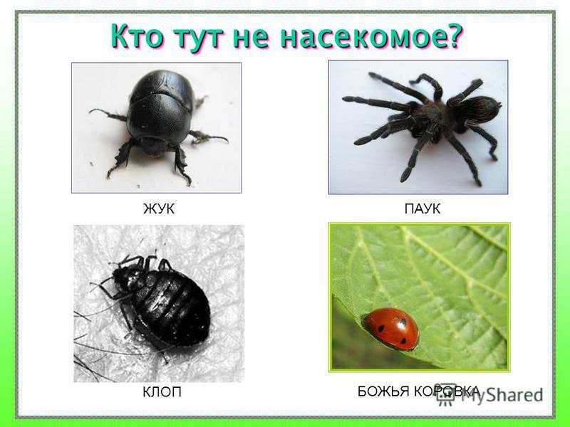 А если вы увидите насекомое, сможете ли вы его узнать? Давайте проверим?
