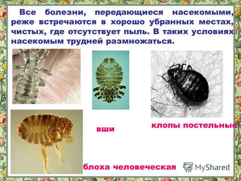 Мухи являются разносчиками и холеры, дизентерии, гепатита и тифозной лихорадки. Они кусаются и пьют кровь. Осенью в щель заберётся, а весной проснётся. Большинство укусов насекомых поражает на некоторое время и не очень серьезно. Но у некоторых людей