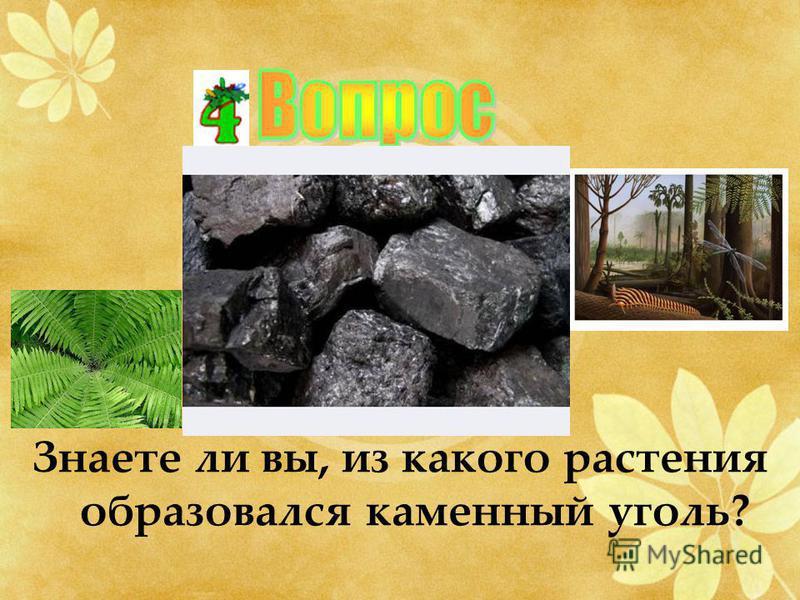 Знаете ли вы, из какого растения образовался каменный уголь?