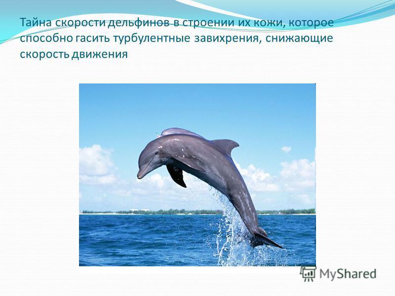 Тайна скорости дельфинов в строении их кожи, которое способно гасить турбулентные завихрения, снижающие скорость движения
