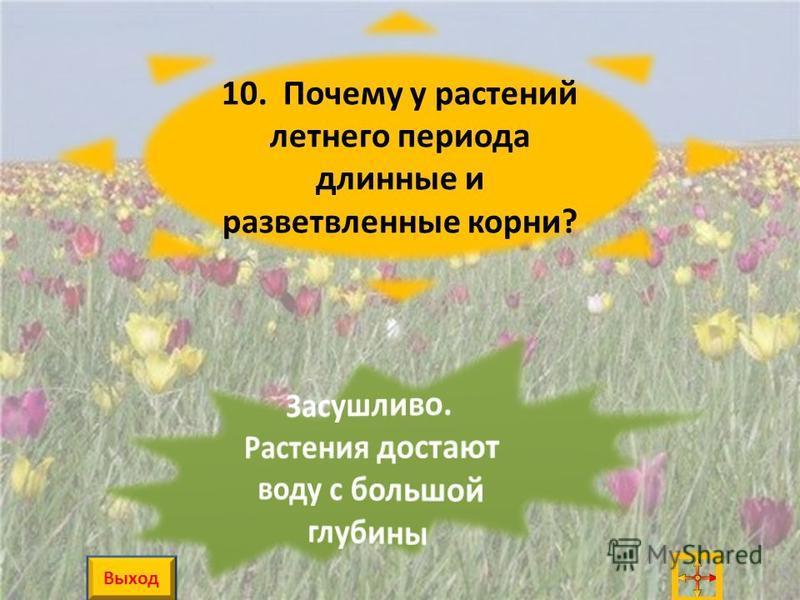 10. Почему у растений летнего периода длинные и разветвленные корни? Выход