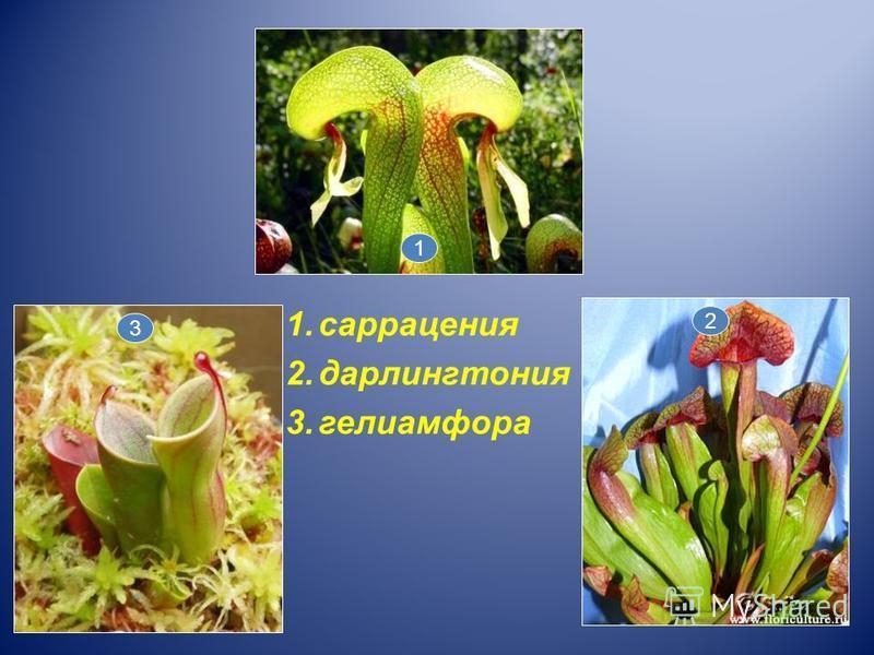 1. саррацения 2. дарлингтония 3. гелиамфора 2 3 1