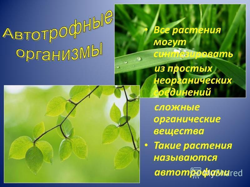 Все растения могут синтезировать из простых неорганических соединений сложные органические вещества Такие растения называются автотрофами