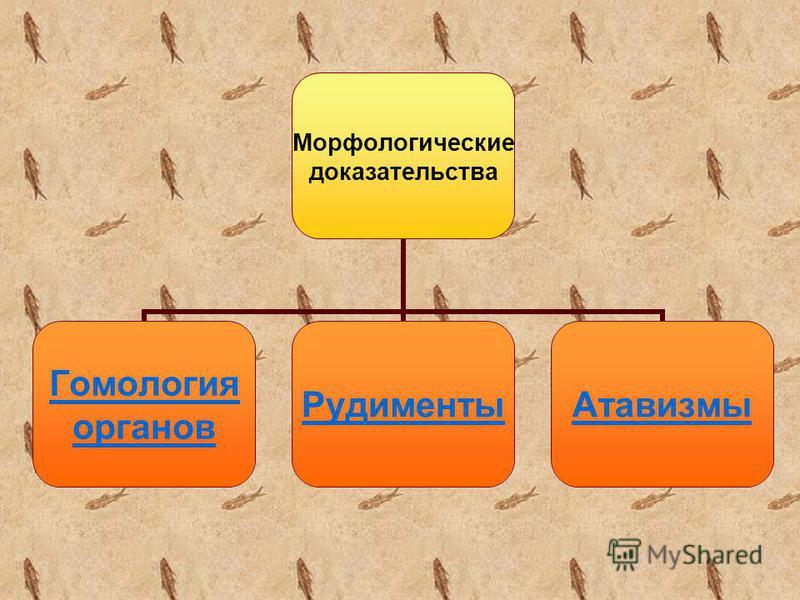 Морфологические доказательства Гомология органов Рудименты Атавизмы