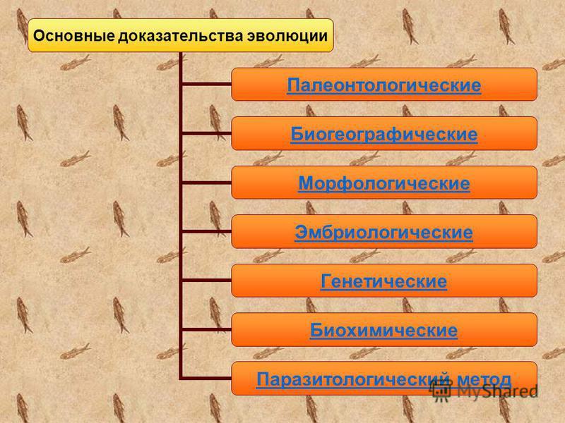 Основные доказательства эволюции Палеонтологические Биогеографические Морфологические Эмбриологические Генетические Биохимические Паразитологический метод