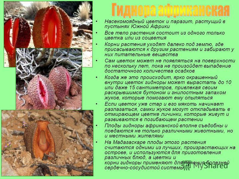 растущий паразит в организме