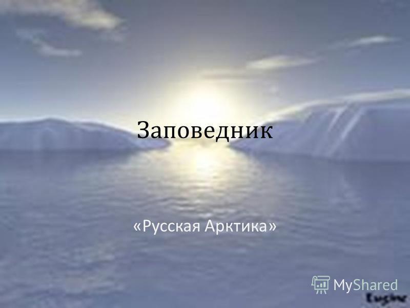 Заповедник « Русская Арктика »