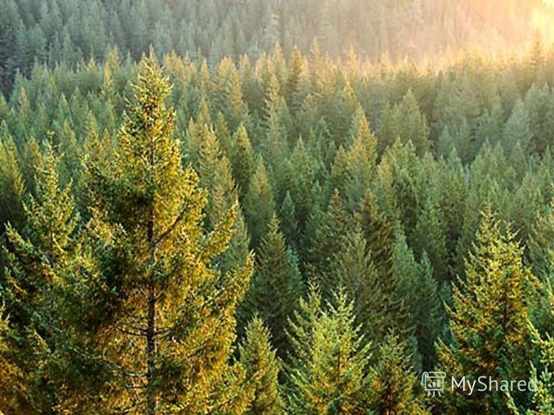 4. Лист какого дерева вы видите перед собой.